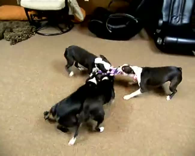 Four Way Tug of War