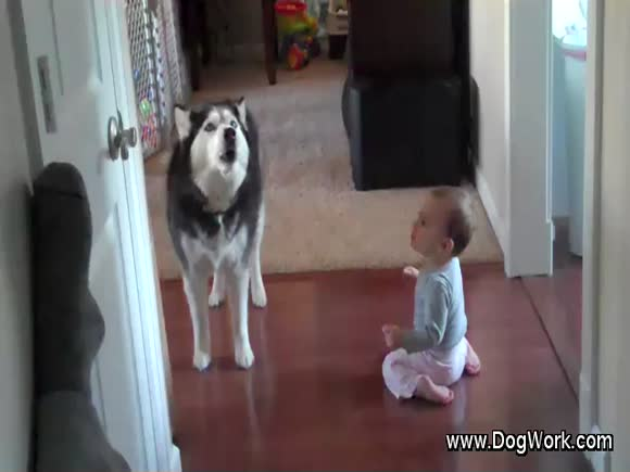 A Husky Sings With A Baby