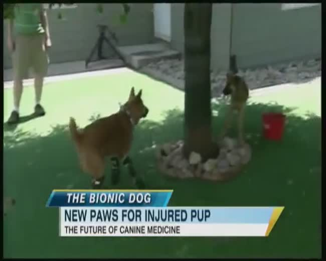 Bionic dog runs