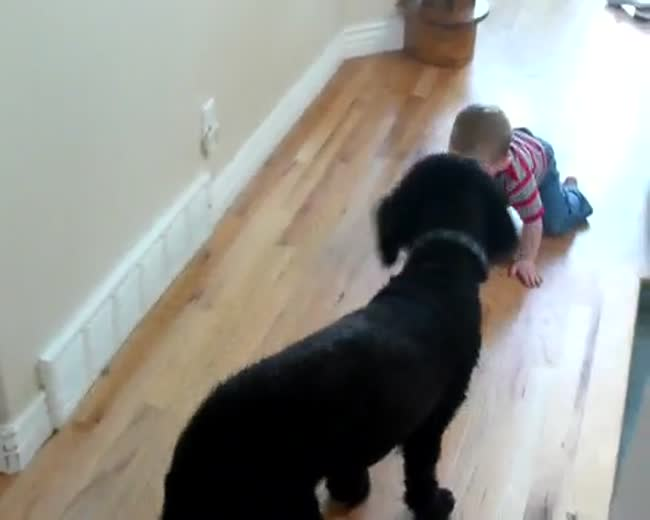 Dog plays with baby