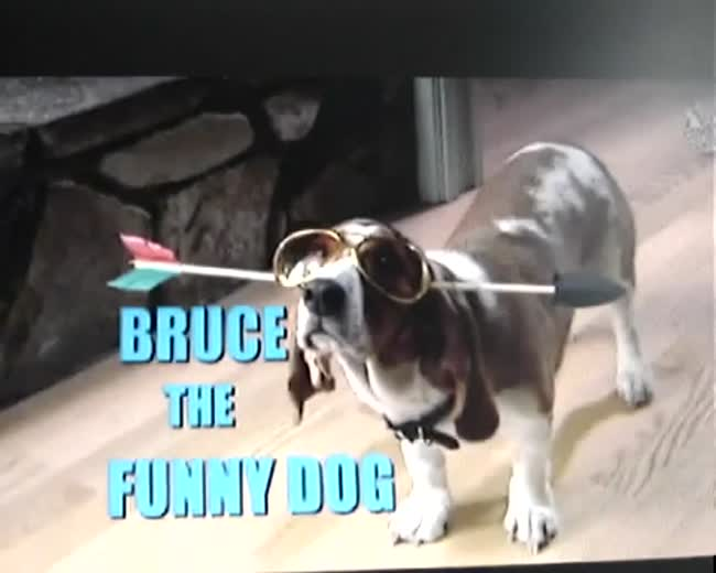 One Funny Dog