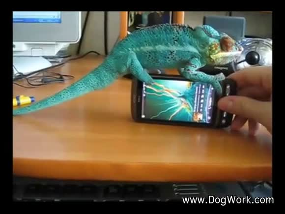 Chameleon on the Phone