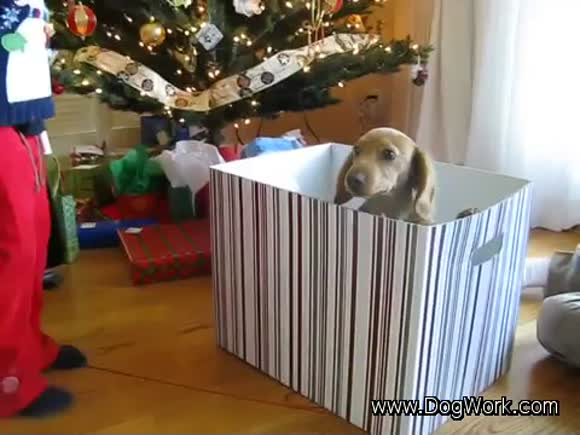 The Ultimate Christmas Surprise
