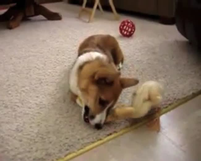 Little Duck wants Doggy's Bone