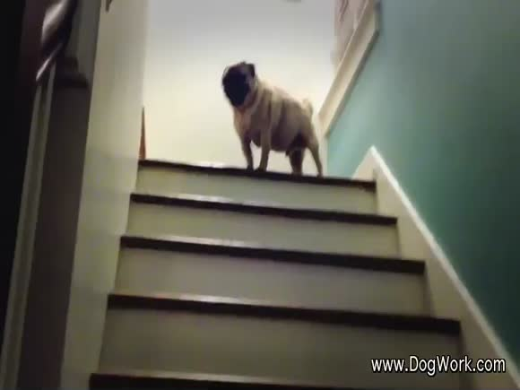 The Dog Loves Hopping Up Stairs