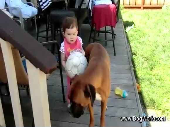 A Dog Protects A Baby from Falling