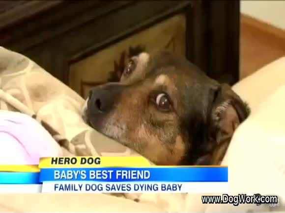 Dog Saves Infant - An Amazing Story