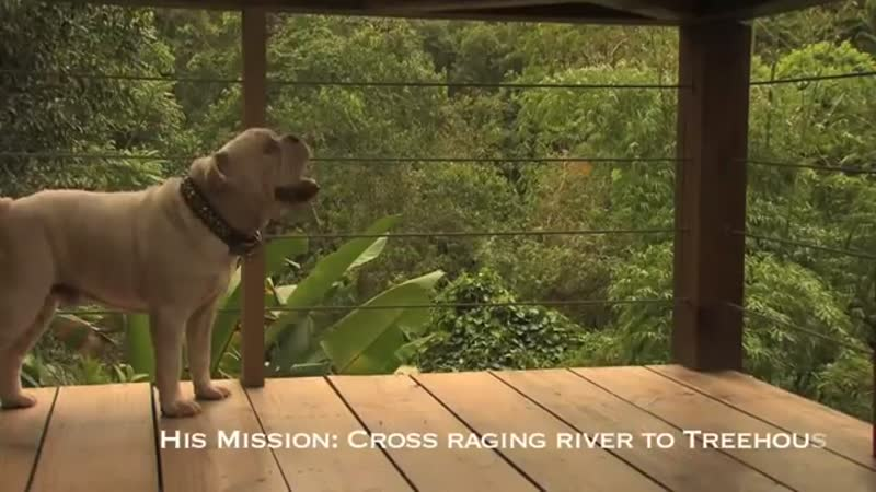 Bulldog Goes on a Quest