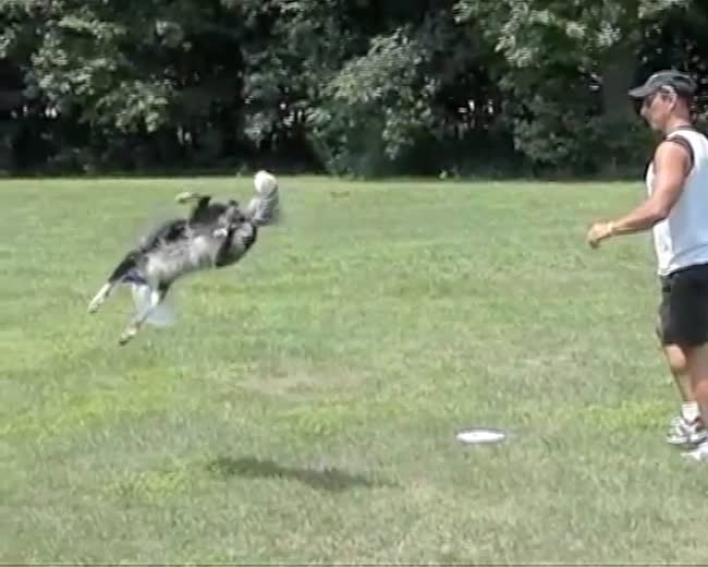This dog can fly