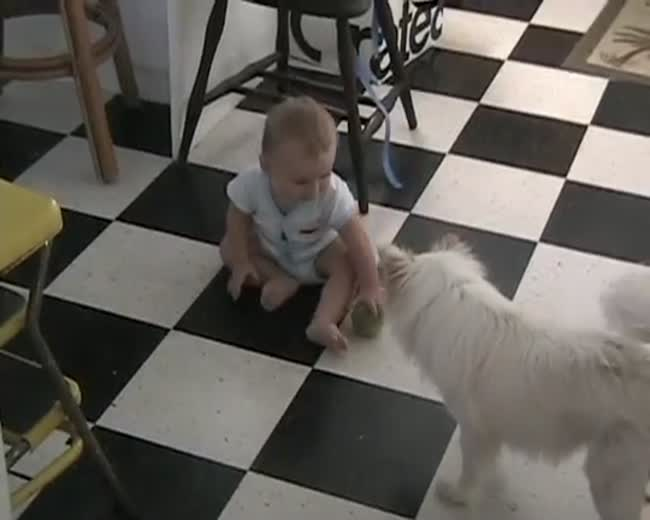 Dog and Baby Play Fetch