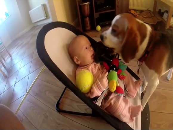 Guilty Dog Apologizes to Baby