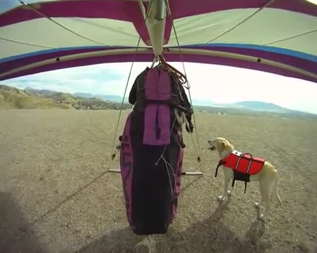 My dog loves to watch me fly