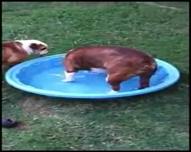 Dog wants to bring his pool inside the house