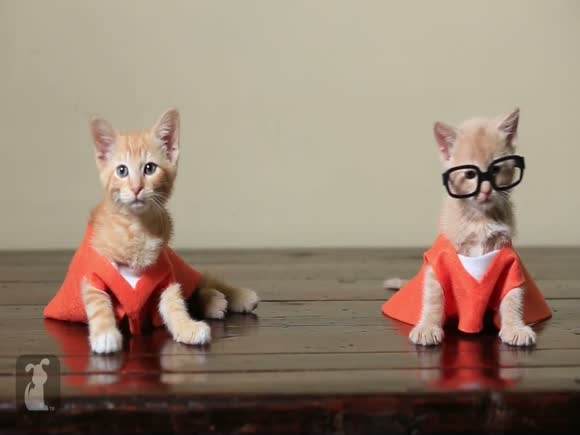 Orange is the New Black (Cat Version)