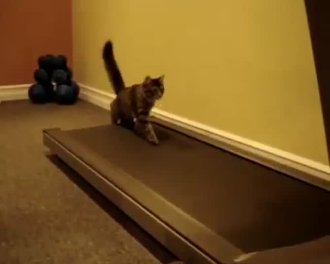Cats at The Gym