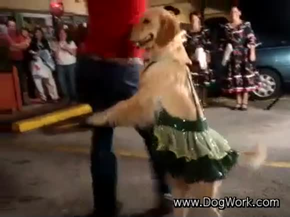 Latin Dance of the Dogs
