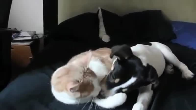 Dog and cat in love with each other