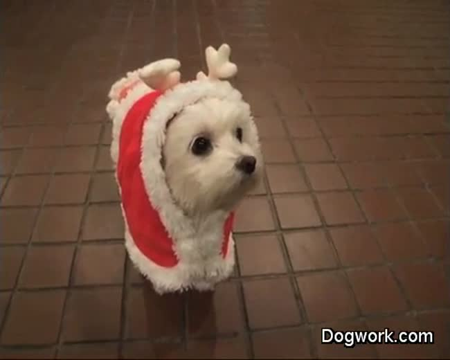 The cutest doggy reindeer you will see today