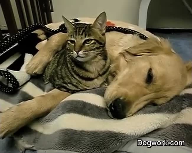 Dog and Cat - Best friends always cuddle