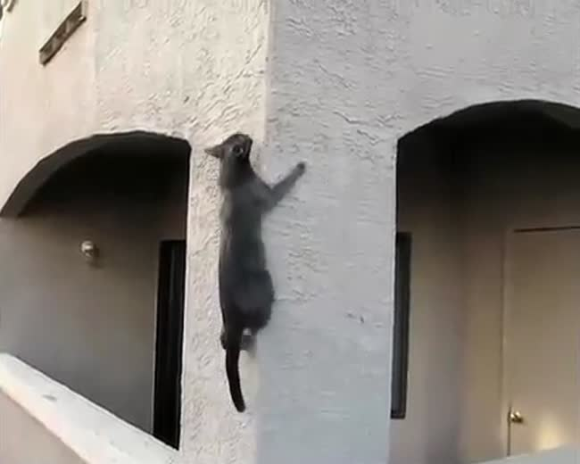Ninja Kitty Cats