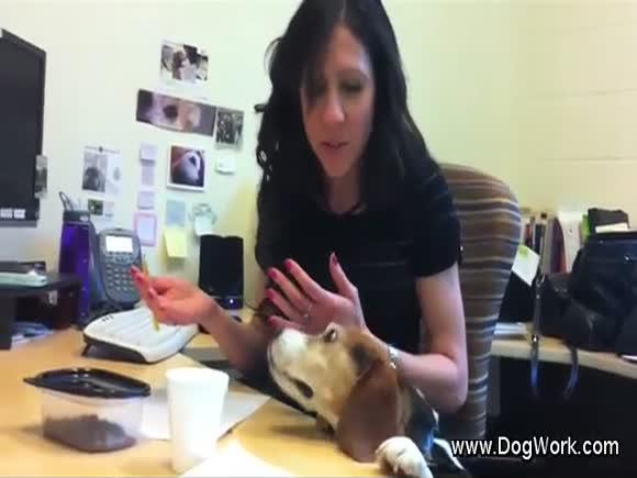 A Canine Office Assistant