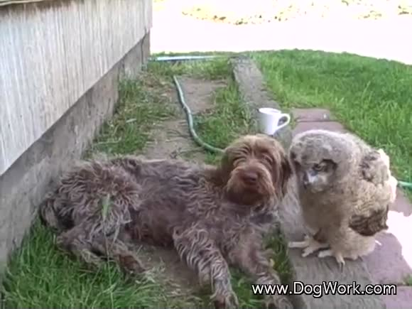 The Owl Who Loved The Dog