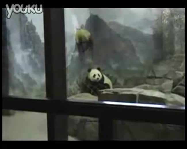 The Great Panda Escape