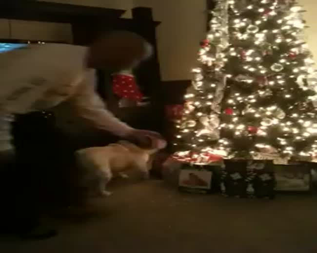 The dog says that no one is opening presents