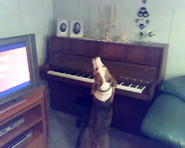 My Dog the Musician