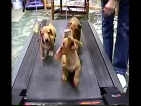Three Puppies, One Treadmill