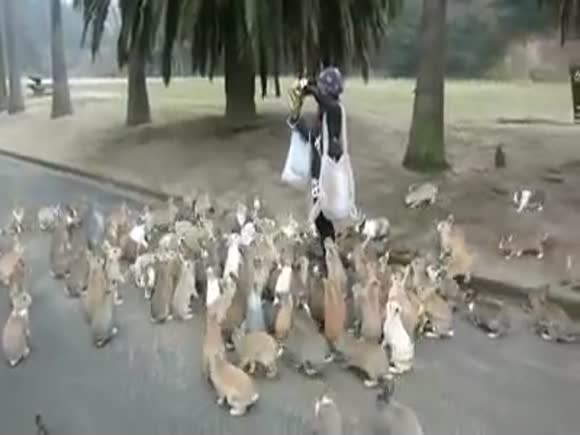 Woman Swarmed by Rabbits