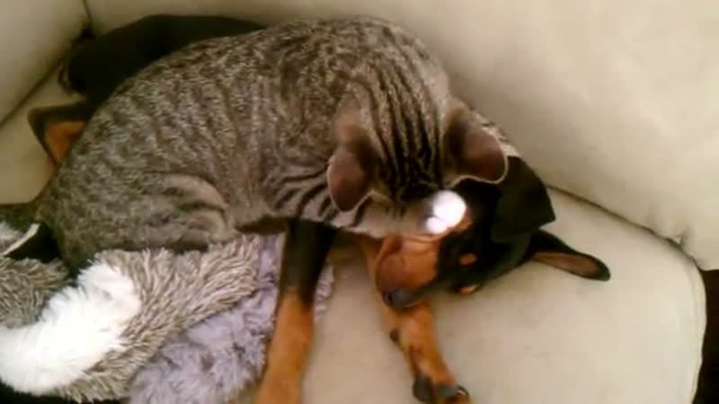 Dog and cat just love to snuggle