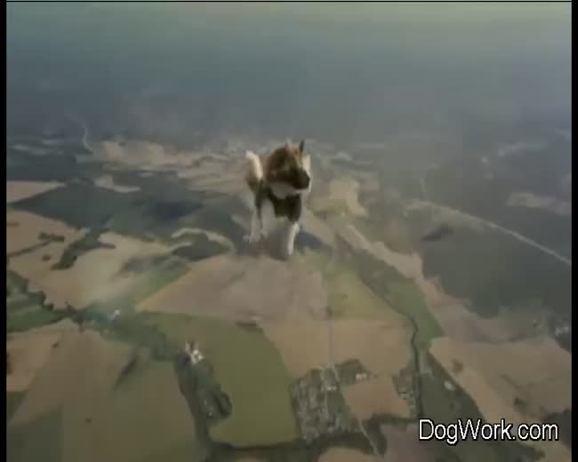 Extreme Skydiving Cats (no cats were harmed)