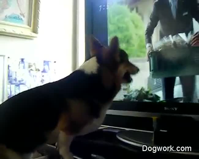 Dog gets a new TV