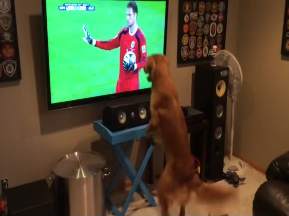 Dog Loves the World Cup